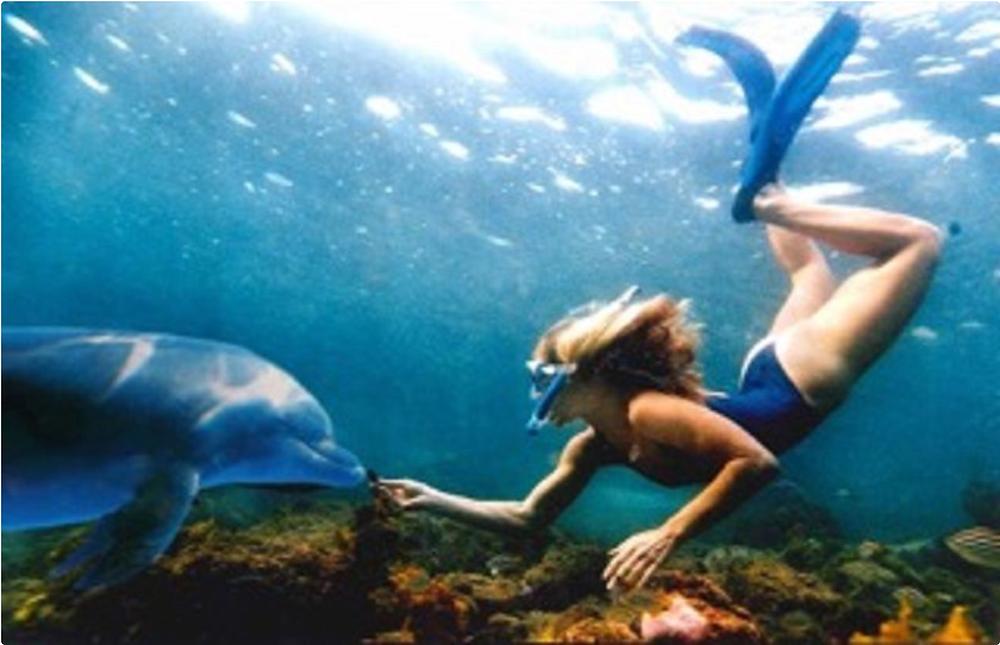La delphinothérapie avec Olivia De Bergerac