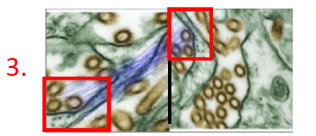 Proofig Scanning image resoults  for duplications detections - 3.png