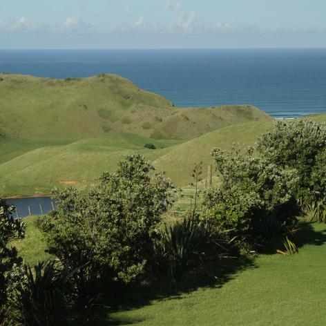 Omamari, North Island