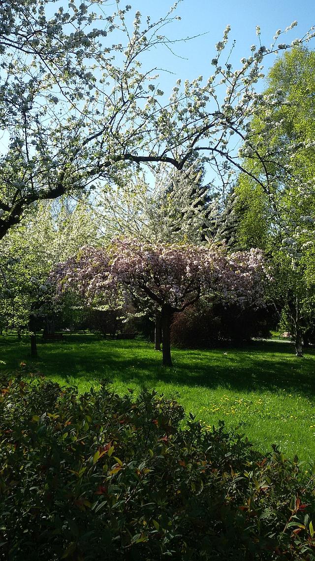 wiosna na rakowcu 1