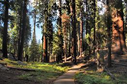 Sequoia Park, Usa