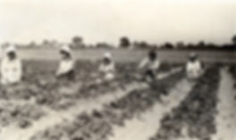 Bachan Shinta's Strawberry Farm 1920s.jpg
