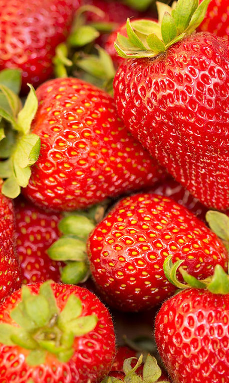 strawberry_illustration_1.jpg