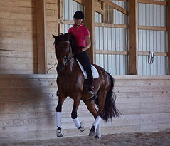 Dressage lessons and training