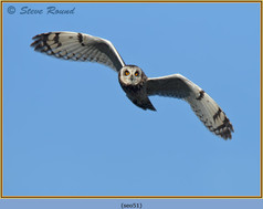short-eared-owl-51.jpg