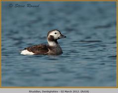 long-tailed-duck-18.jpg