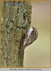 treecreeper-12.jpg