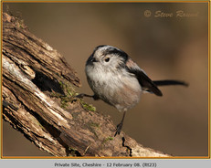 long-tailed-tit-23.jpg