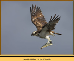 osprey-18.jpg