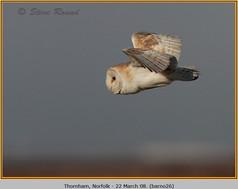 barn-owl-26.jpg