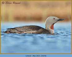 red-throated-diver- 78.jpg