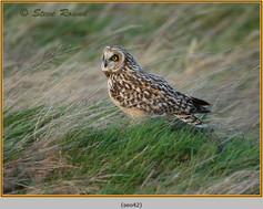 short-eared-owl-42.jpg