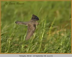 cuckoo-13.jpg