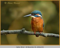 kingfisher-02.jpg