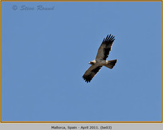 booted-eagle-03.jpg