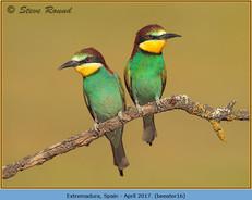 bee-eater-16.jpg
