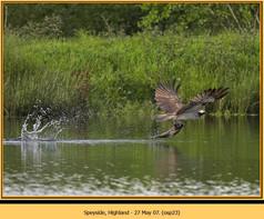osprey-23.jpg