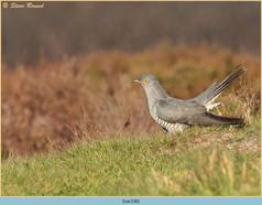 cuckoo-136.jpg