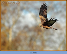 red-kite-69.jpg