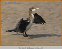 cormorant-04.jpg