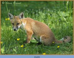 fox-69.jpg