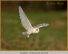 barn-owl-18.jpg
