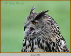eagle-owl-05c.jpg