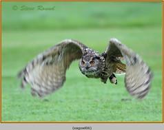 eagle-owl-06c.jpg