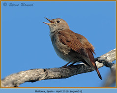 nightingale-01.jpg