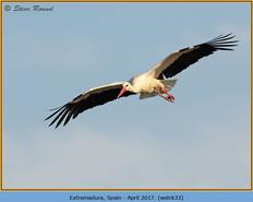 white-stork-33.jpg