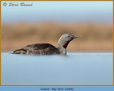 red-throated-diver- 94.jpg