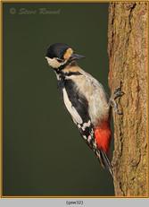 gt-s-woodpecker-32.jpg
