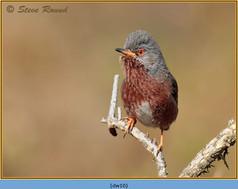 dartford-warbler-10.jpg