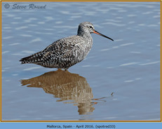 spotted-redshank-33.jpg