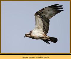 osprey-13.jpg