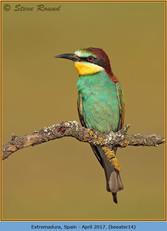 bee-eater-14.jpg