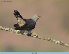 cuckoo-127.jpg