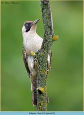 green-woodpecker-53.jpg