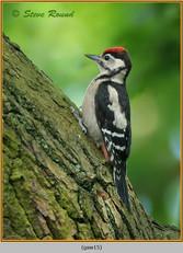 gt-s-woodpecker-15.jpg