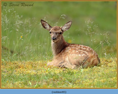 red-deer-85.jpg