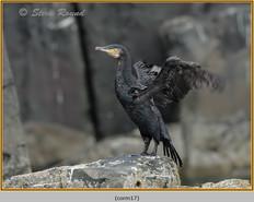 cormorant-17.jpg
