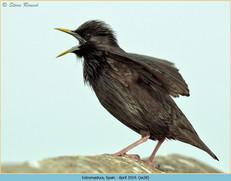 spotless-starling-28.jpg