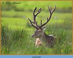 red-deer-86.jpg