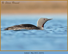 red-throated-diver- 73.jpg