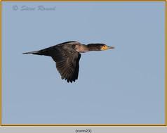 cormorant-23.jpg