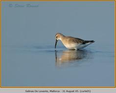 curlew-sandpiper-05.jpg