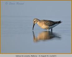 curlew-sandpiper-07.jpg