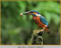 kingfisher-01.jpg