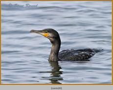 cormorant-20.jpg