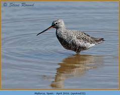 spotted-redshank-32.jpg